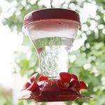 Make Your Own Hummingbird Feeder Food