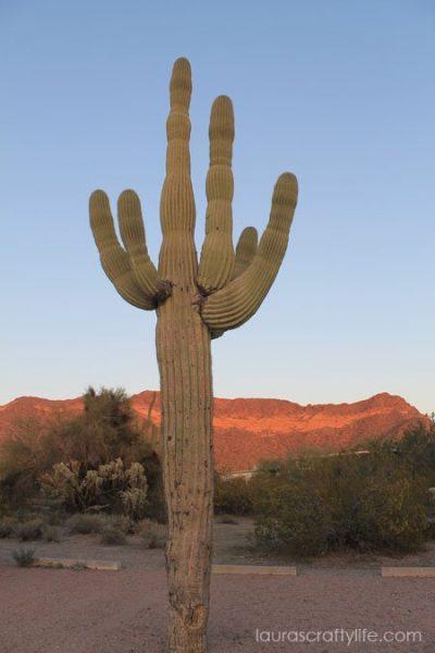 desert cactus before