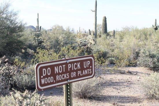 desert sign before