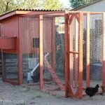 How to Build a Chicken Coop: Part 2