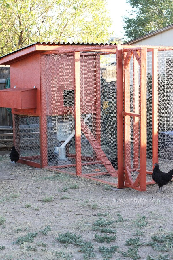 How to Build a Chicken Coop with free plans - Laura's Crafty Life