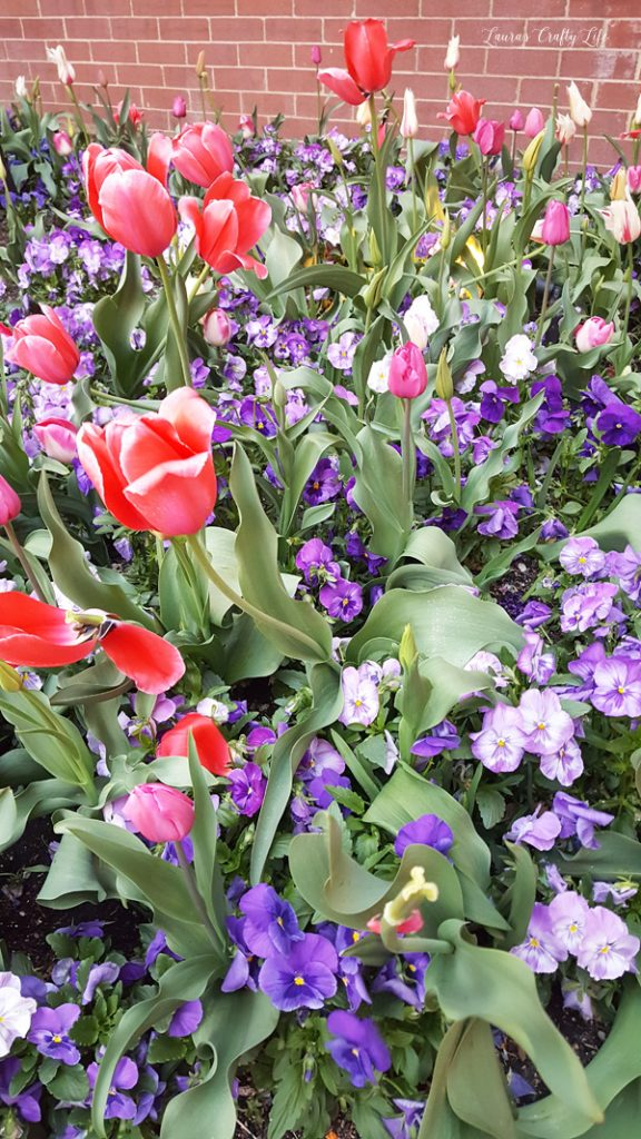 Flowers at Little America Hotel at Snap 2016