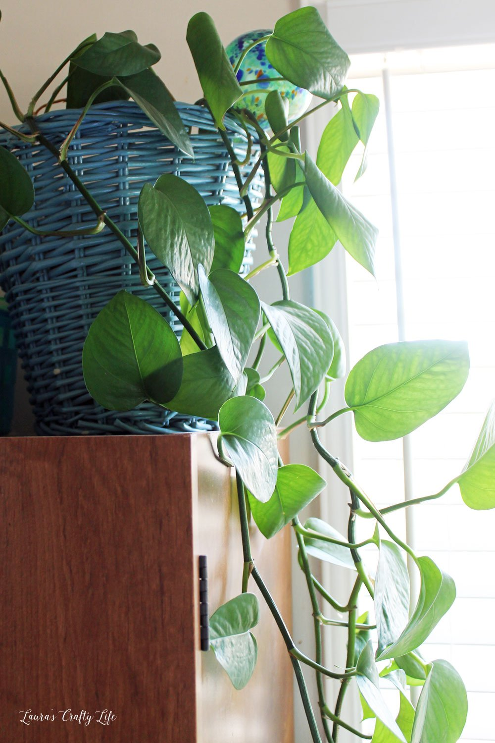 Add air purifying houseplants to your home