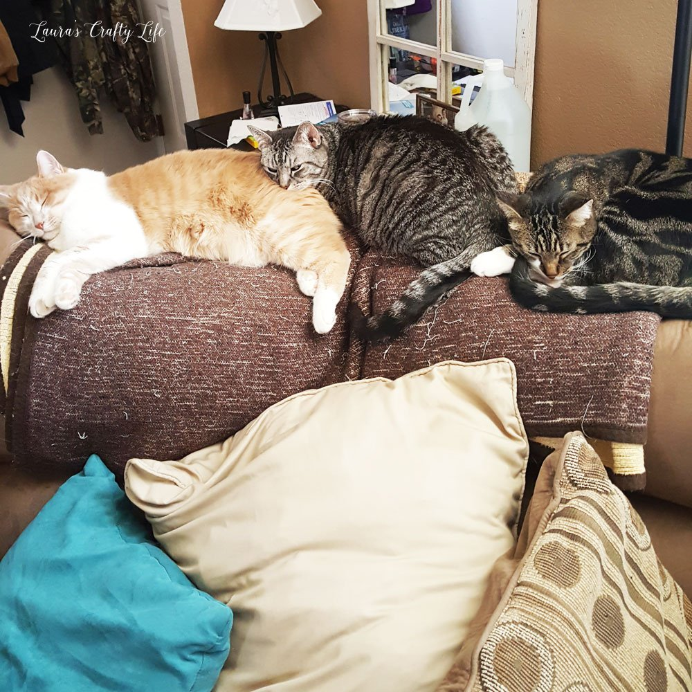 Cats laying on couch - Tigger, Smeagol, and Baby Kitty