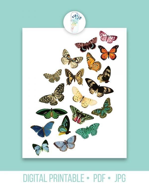 rainbow butterflies digital printable